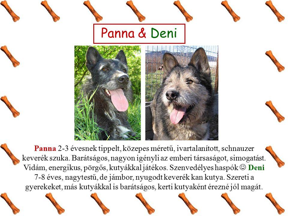 Panna & Deni Panna 2-3 évesnek tippelt, közepes méretű, ivartalanított, schnauzer keverék szuka. Barátságos, nagyon igényli az emberi társaságot, simo