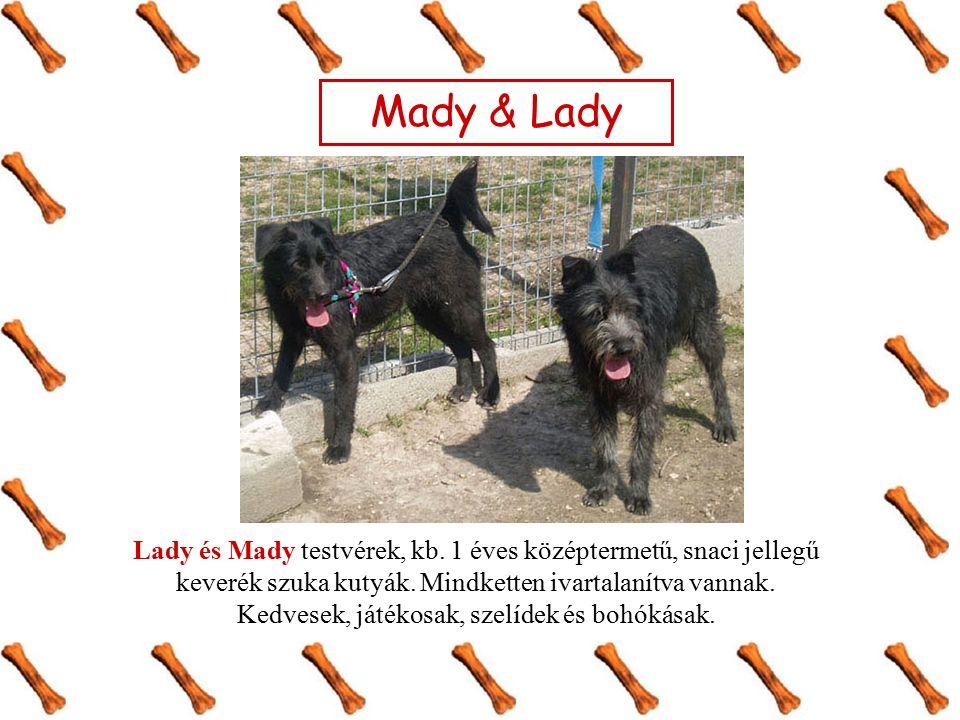 Mady & Lady Lady és Mady testvérek, kb. 1 éves középtermetű, snaci jellegű keverék szuka kutyák. Mindketten ivartalanítva vannak. Kedvesek, játékosak,