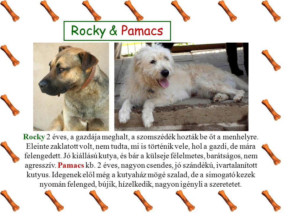 Rocky & Pamacs Rocky 2 éves, a gazdája meghalt, a szomszédék hozták be őt a menhelyre. Eleinte zaklatott volt, nem tudta, mi is történik vele, hol a g