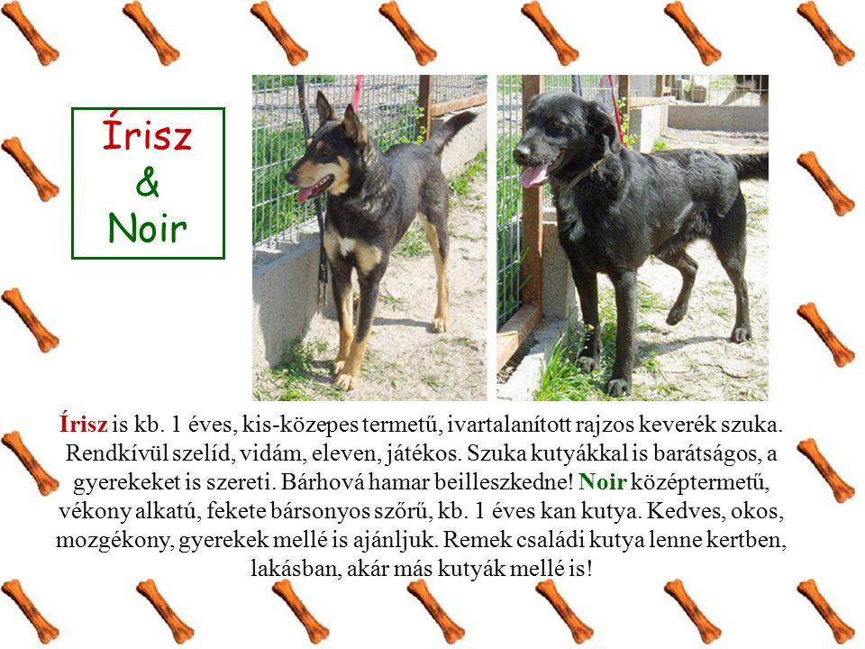 Írisz & Noir Írisz is kb. 1 éves, kis-közepes termetű, ivartalanított rajzos keverék szuka. Rendkívül szelíd, vidám, eleven, játékos. Szuka kutyákkal