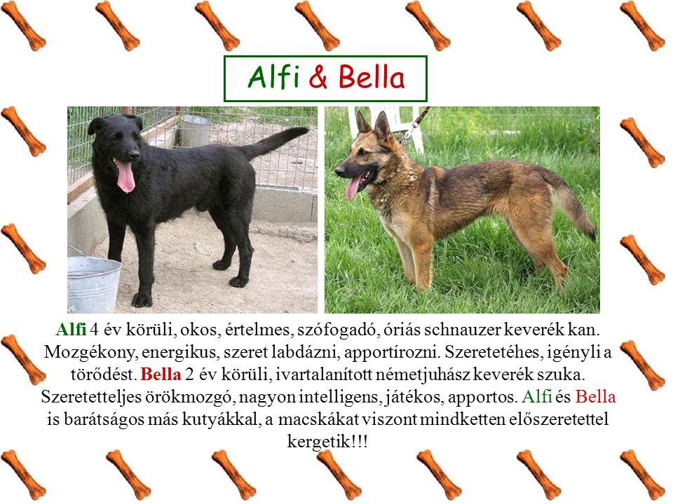 Alfi & Bella Alfi 4 év körüli, okos, értelmes, szófogadó, óriás schnauzer keverék kan. Mozgékony, energikus, szeret labdázni, apportírozni. Szeretetéh