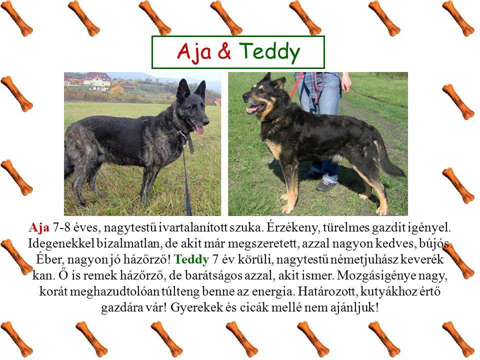 Aja & Teddy Aja 7-8 éves, nagytestű ivartalanított szuka. Érzékeny, türelmes gazdit igényel. Idegenekkel bizalmatlan, de akit már megszeretett, azzal