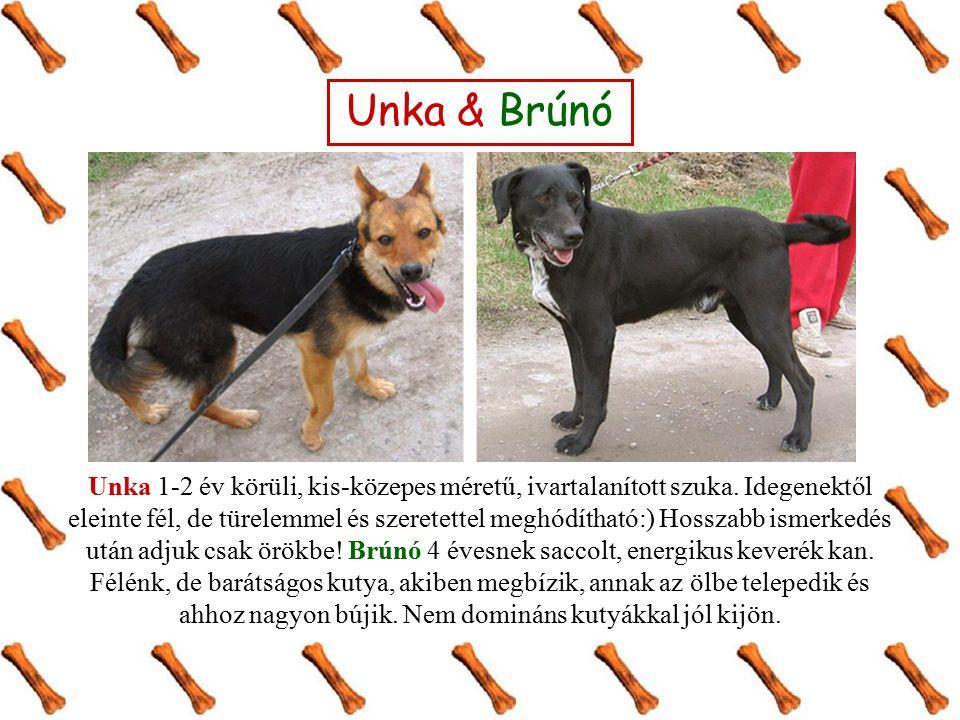 Unka & Brúnó Unka 1-2 év körüli, kis-közepes méretű, ivartalanított szuka. Idegenektől eleinte fél, de türelemmel és szeretettel meghódítható:) Hossza