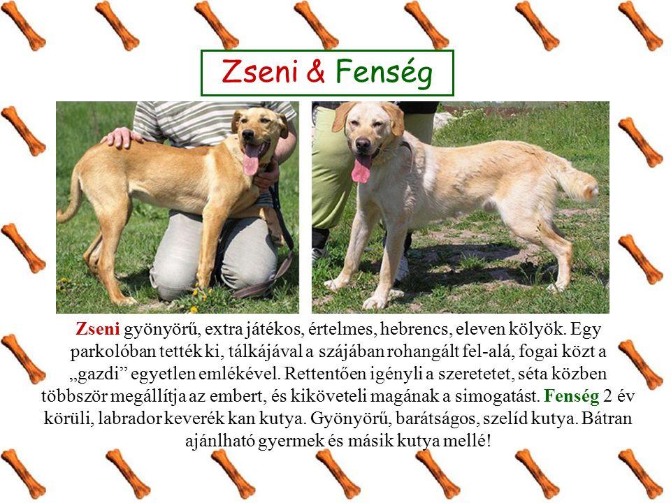 Leopold és Gömbi kiváló házőrző.Leopold 1 év körüli, tacskó méretű keverék kan kutya.