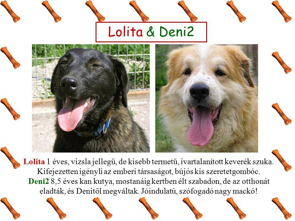 Lotti & Pityu Lotti 1 év körüli, közepes méretű, németjuhász keverék, ivartalanított szuka.