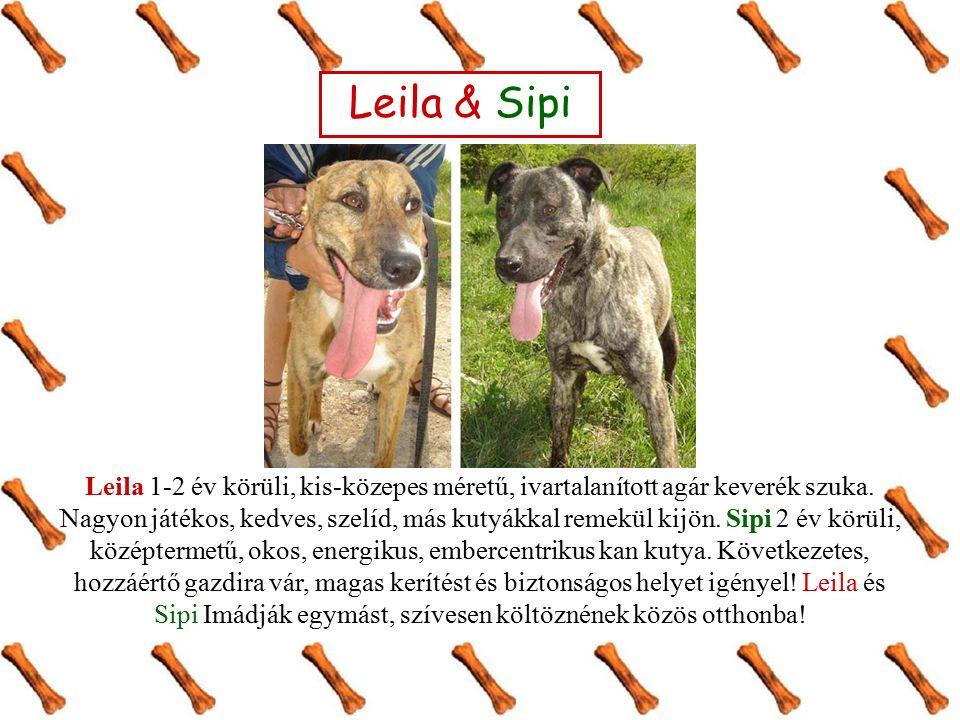 Leila & Sipi Leila 1-2 év körüli, kis-közepes méretű, ivartalanított agár keverék szuka. Nagyon játékos, kedves, szelíd, más kutyákkal remekül kijön.