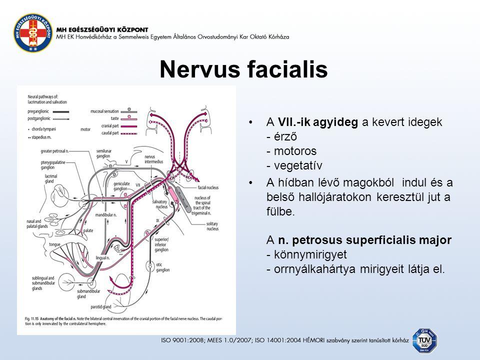 Nervus facialis A VII.-ik agyideg a kevert idegek - érző - motoros - vegetatív A hídban lévő magokból indul és a belső hallójáratokon keresztül jut a fülbe.