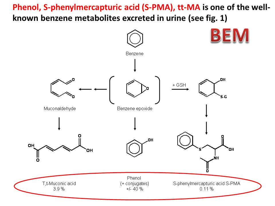 Phenol, S-phenylmercapturic acid (S-PMA), tt-MA is one of the well- known benzene metabolites excreted in urine (see fig. 1)