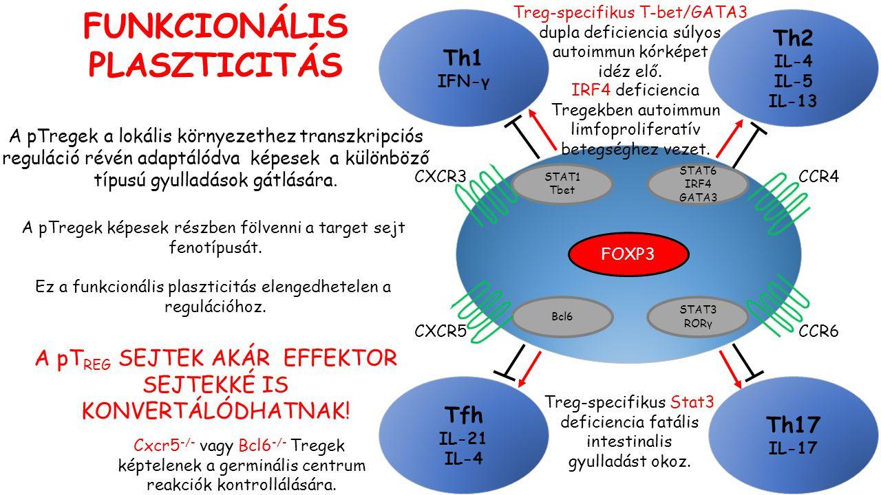 STAT6 IRF4 GATA3 STAT1 Tbet STAT3 RORγ FOXP3 Th17 IL-17 Th2 IL-4 IL-5 IL-13 Th1 IFN-γ Tfh IL-21 IL-4 Bcl6 CXCR3 CXCR5CCR6 CCR4 FUNKCIONÁLIS PLASZTICITÁS A pTregek a lokális környezethez transzkripciós reguláció révén adaptálódva képesek a különböző típusú gyulladások gátlására.