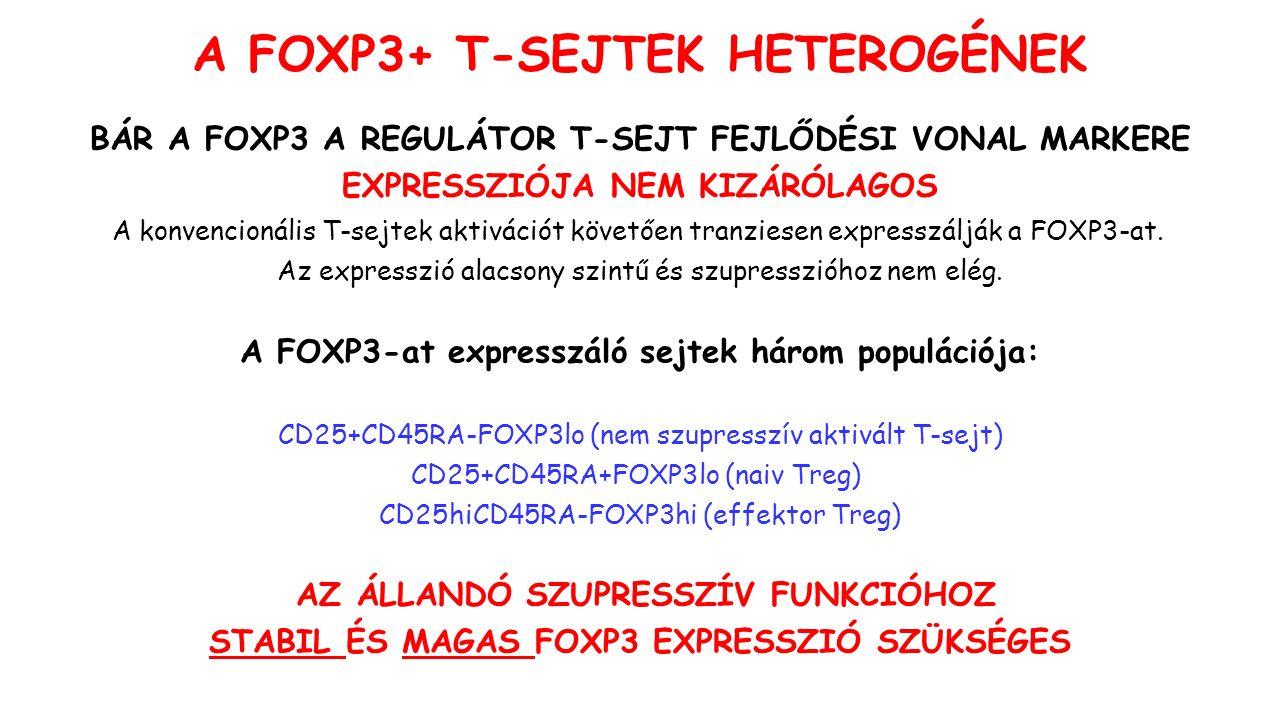 A konvencionális T-sejtek aktivációt követően tranziesen expresszálják a FOXP3-at.