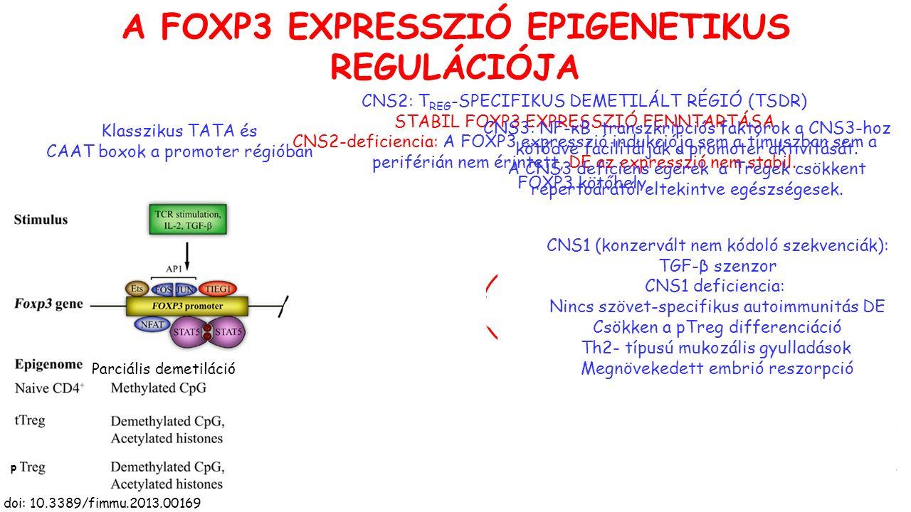 A FOXP3 EXPRESSZIÓ EPIGENETIKUS REGULÁCIÓJA doi: 10.3389/fimmu.2013.00169 Klasszikus TATA és CAAT boxok a promoter régióban CNS2: T REG -SPECIFIKUS DEMETILÁLT RÉGIÓ (TSDR) STABIL FOXP3 EXPRESSZIÓ FENNTARTÁSA CNS2-deficiencia: A FOXP3 expresszió indukciója sem a tímuszban sem a periférián nem érintett, DE az expresszió nem stabil.