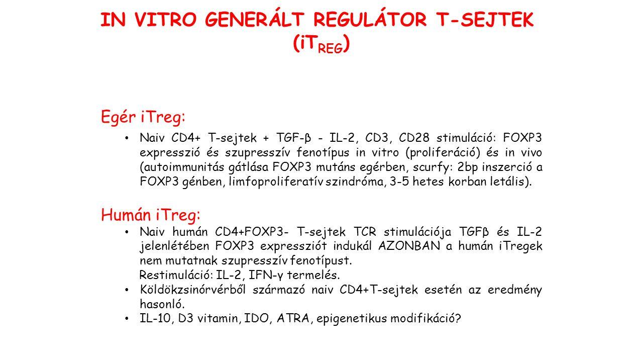 IN VITRO GENERÁLT REGULÁTOR T-SEJTEK (iT REG ) Egér iTreg: Naiv CD4+ T-sejtek + TGF-β - IL-2, CD3, CD28 stimuláció: FOXP3 expresszió és szupresszív fenotípus in vitro (proliferáció) és in vivo (autoimmunitás gátlása FOXP3 mutáns egérben, scurfy: 2bp inszerció a FOXP3 génben, limfoproliferatív szindróma, 3-5 hetes korban letális).