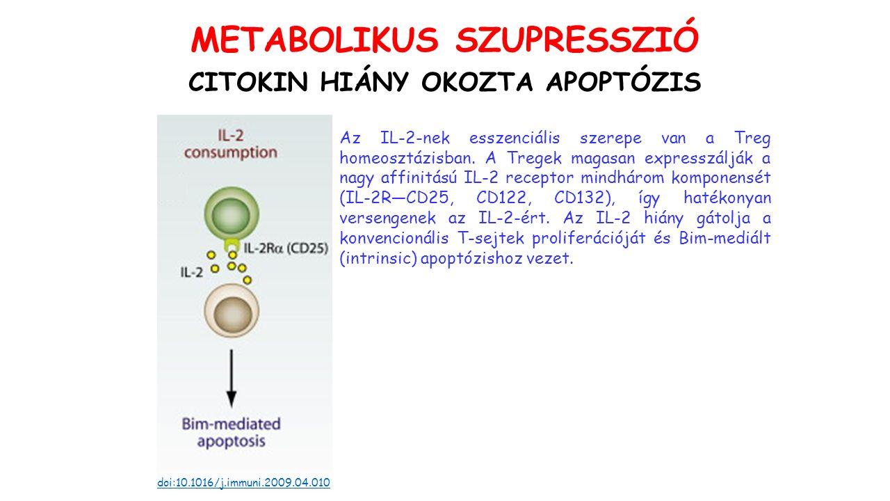 CITOKIN HIÁNY OKOZTA APOPTÓZIS doi:10.1016/j.immuni.2009.04.010 Az IL-2-nek esszenciális szerepe van a Treg homeosztázisban.