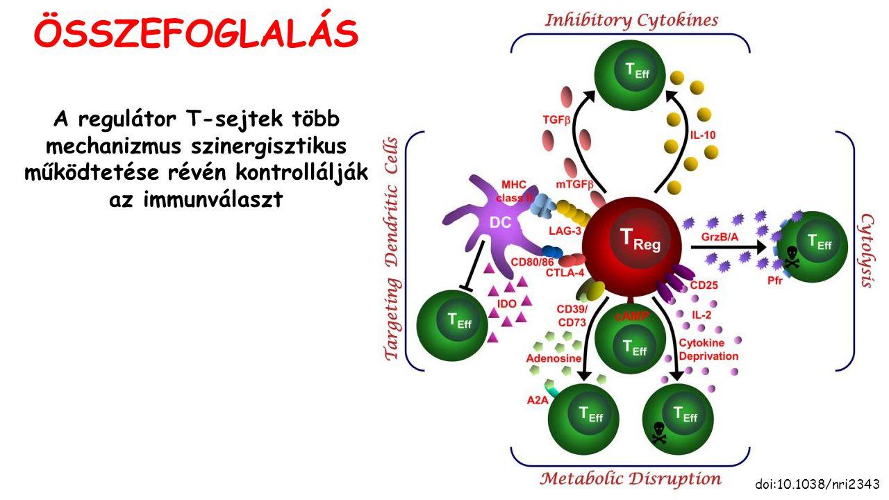 ÖSSZEFOGLALÁS doi:10.1038/nri2343 A regulátor T-sejtek több mechanizmus szinergisztikus működtetése révén kontrollálják az immunválaszt