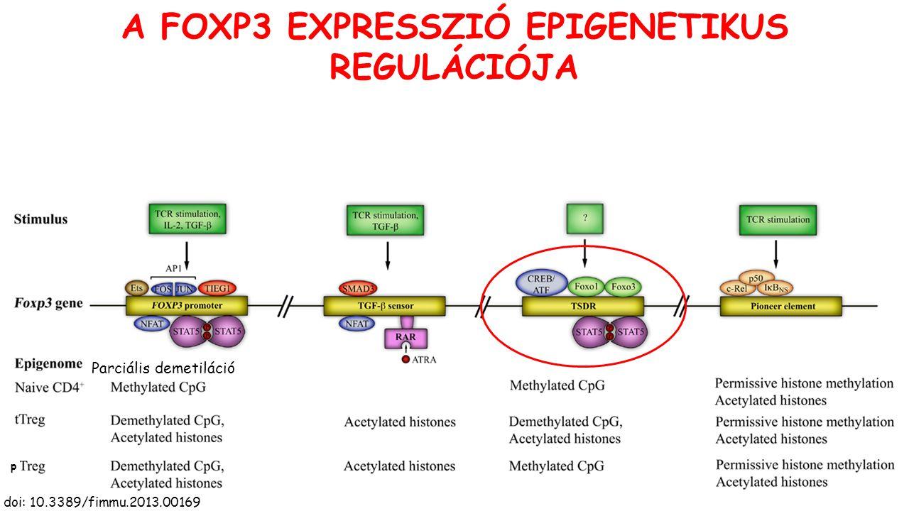 A FOXP3 EXPRESSZIÓ EPIGENETIKUS REGULÁCIÓJA doi: 10.3389/fimmu.2013.00169 p Parciális demetiláció