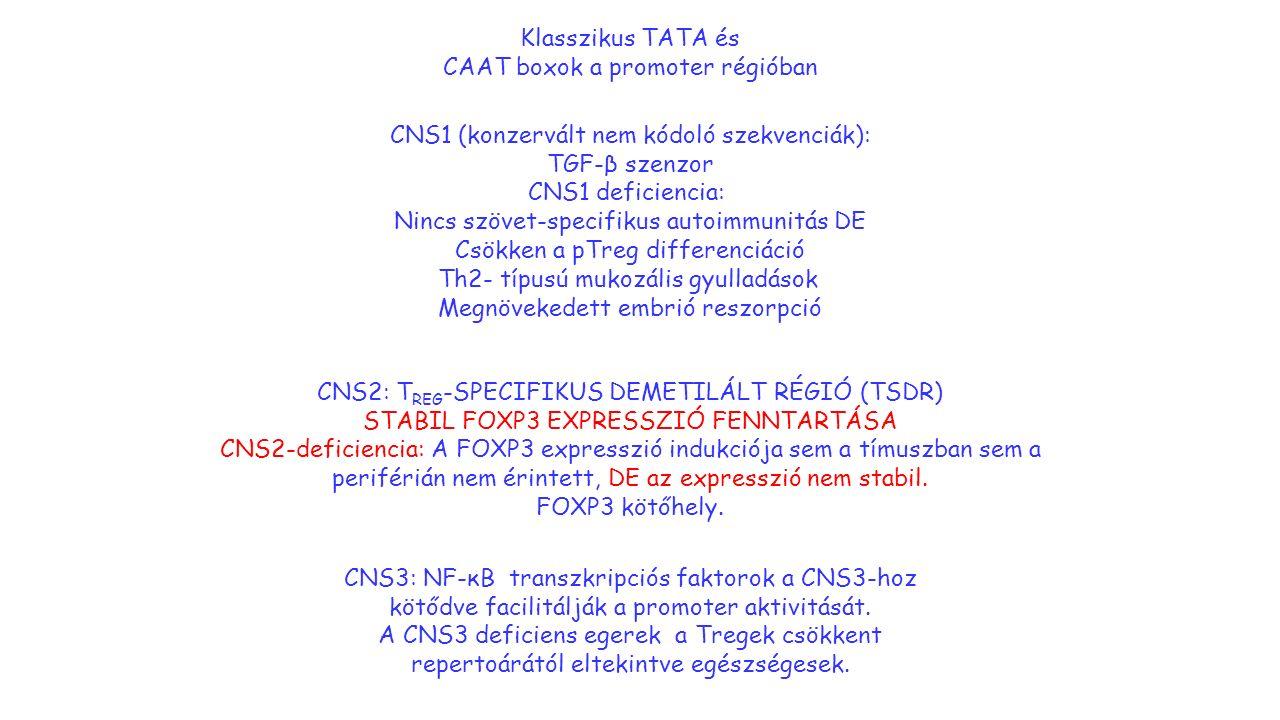 Klasszikus TATA és CAAT boxok a promoter régióban CNS1 (konzervált nem kódoló szekvenciák): TGF-β szenzor CNS1 deficiencia: Nincs szövet-specifikus autoimmunitás DE Csökken a pTreg differenciáció Th2- típusú mukozális gyulladások Megnövekedett embrió reszorpció CNS2: T REG -SPECIFIKUS DEMETILÁLT RÉGIÓ (TSDR) STABIL FOXP3 EXPRESSZIÓ FENNTARTÁSA CNS2-deficiencia: A FOXP3 expresszió indukciója sem a tímuszban sem a periférián nem érintett, DE az expresszió nem stabil.