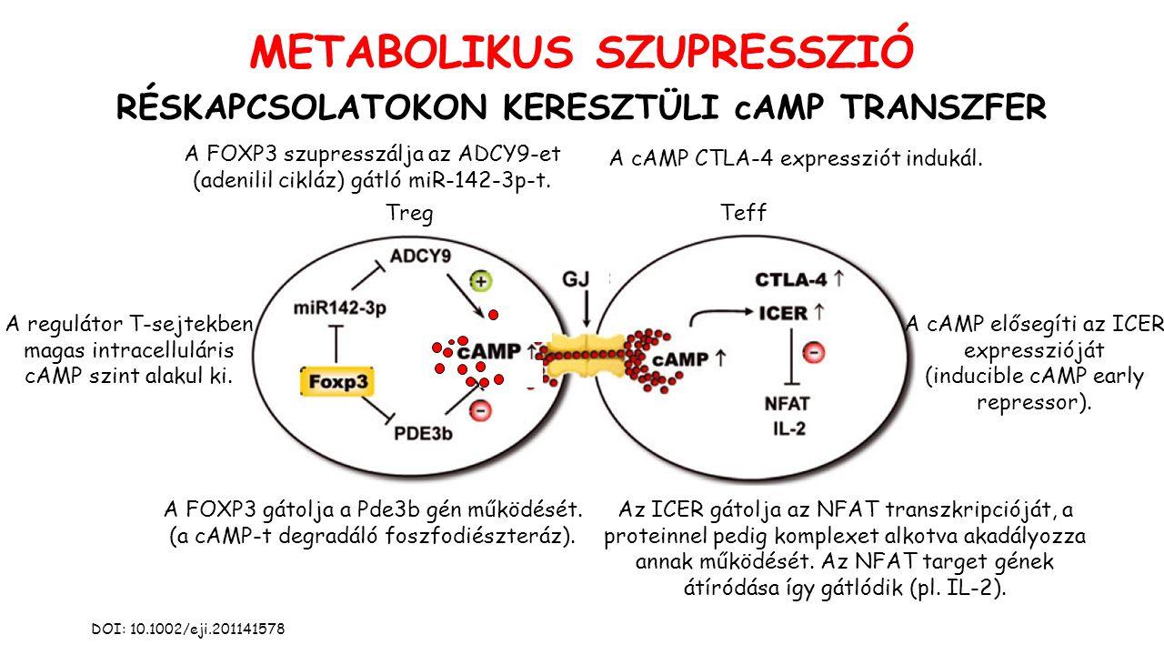 METABOLIKUS SZUPRESSZIÓ RÉSKAPCSOLATOKON KERESZTÜLI cAMP TRANSZFER DOI: 10.1002/eji.201141578 TregTeff A regulátor T-sejtekben magas intracelluláris cAMP szint alakul ki.