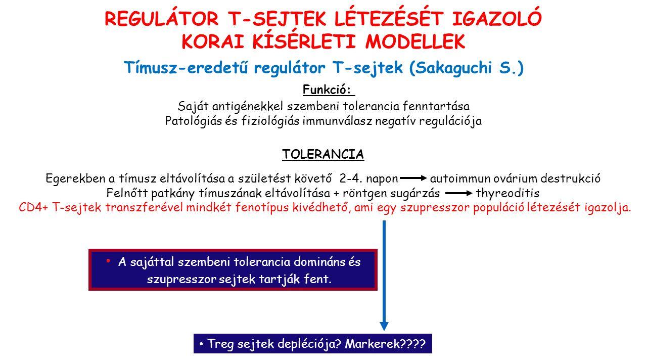 REGULÁTOR T-SEJTEK LÉTEZÉSÉT IGAZOLÓ KORAI KÍSÉRLETI MODELLEK Tímusz-eredetű regulátor T-sejtek (Sakaguchi S.) Funkció: Saját antigénekkel szembeni tolerancia fenntartása Patológiás és fiziológiás immunválasz negatív regulációja TOLERANCIA Egerekben a tímusz eltávolítása a születést követő 2-4.