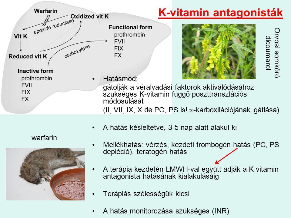 K-vitamin antagonisták Hatásmód: gátolják a véralvadási faktorok aktiválódásához szükséges K-vitamin függő poszttranszlációs módosulását (II, VII, IX, X de PC, PS is.