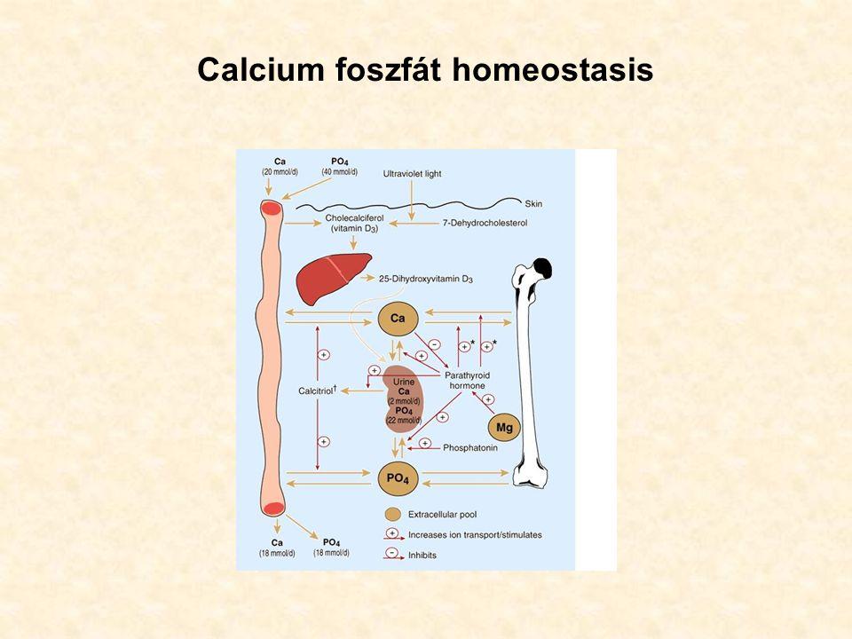 Primer hyperparathyreosis (laboratóriumi eredmények) Hypercalcaemia (mely lehet állandó, de intermittáló is) Hypofoszfatémia A szérum HCO 3 - szint alacsonyabb, mint 24 mmol/l A szérum klór értéke magasabb 107 mmol/l-nél Hypercalciuria Szérum húgysav magasabb, mint 400  mol/l Emelkedett szérum PTH szint Megnövekedett – vizelet kreatininre vonatkoztatott – cAMP ürítés