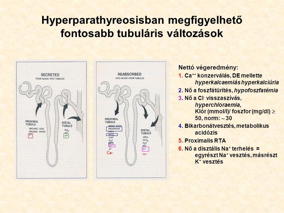Hyperparathyreosisban megfigyelhető fontosabb tubuláris változások Nettó végeredmény : 1.