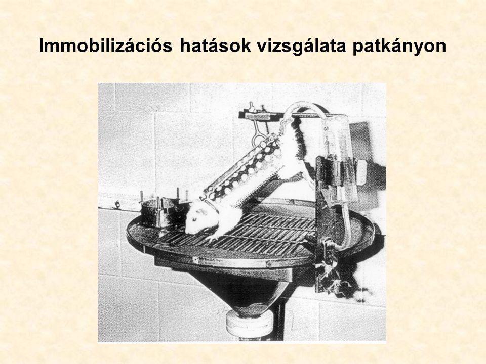 Immobilizációs hatások vizsgálata patkányon