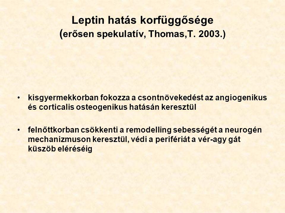 Leptin hatás korfüggősége ( erősen spekulatív, Thomas,T.