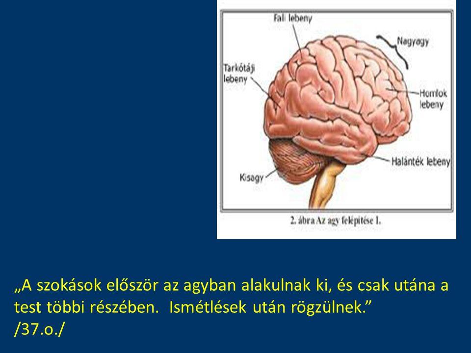 """""""A szokások először az agyban alakulnak ki, és csak utána a test többi részében. Ismétlések után rögzülnek."""" /37.o./"""