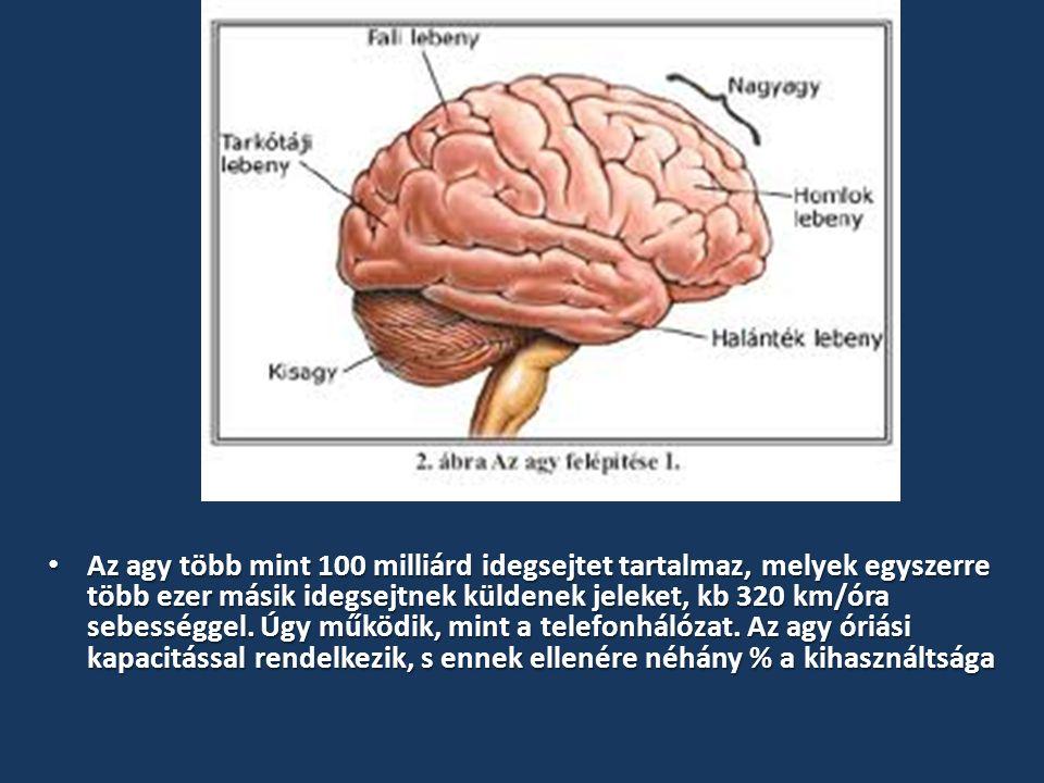 Az agy több mint 100 milliárd idegsejtet tartalmaz, melyek egyszerre több ezer másik idegsejtnek küldenek jeleket, kb 320 km/óra sebességgel.