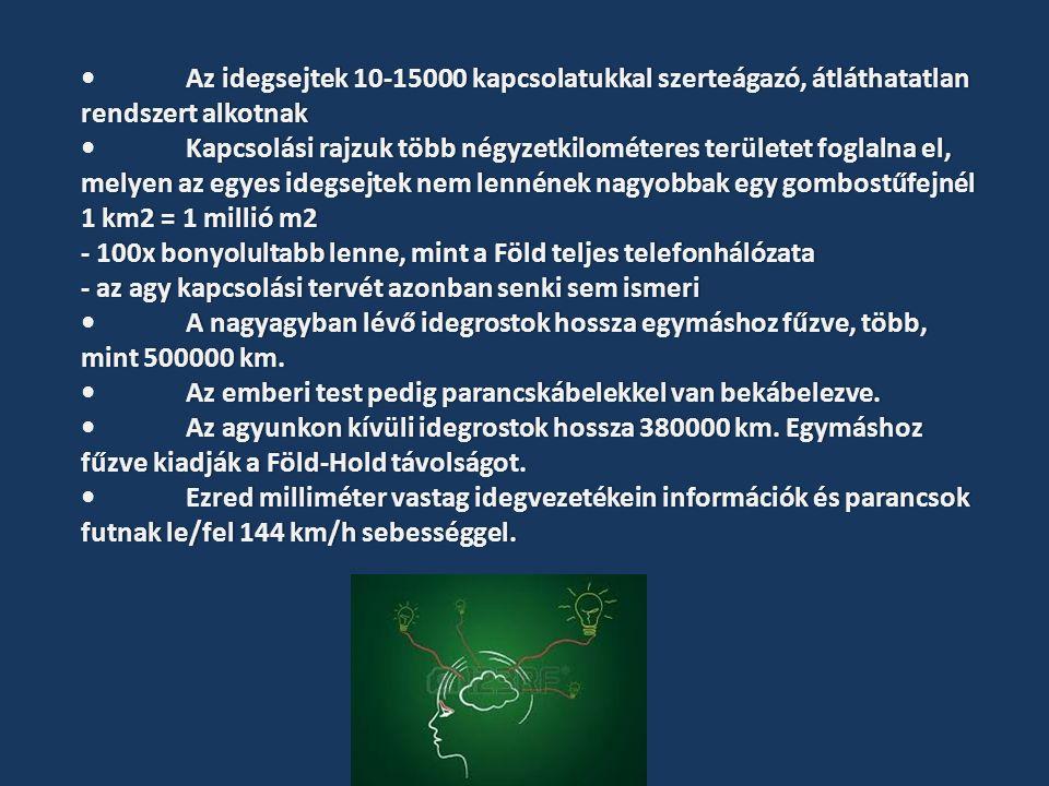 Azidegsejtek10-15000kapcsolatukkalszerteágazó,átláthatatlan rendszertalkotnakAz idegsejtek 10-15000 kapcsolatukkal szerteágazó, átláthatatlan rendszert alkotnak Kapcsolásirajzuktöbbnégyzetkilométeresterületetfoglalnael, melyenazegyesidegsejteknemlennéneknagyobbakegygombostűfejnél 1km2=1millióm2Kapcsolási rajzuk több négyzetkilométeres területet foglalna el, melyen az egyes idegsejtek nem lennének nagyobbak egy gombostűfejnél 1 km2 = 1 millió m2 -100xbonyolultabblenne,mintaFöldteljestelefonhálózata- 100x bonyolultabb lenne, mint a Föld teljes telefonhálózata -azagykapcsolásitervétazonbansenkisemismeri- az agy kapcsolási tervét azonban senki sem ismeri Anagyagybanlévőidegrostokhosszaegymáshozfűzve,több, mint500000km.A nagyagyban lévő idegrostok hossza egymáshoz fűzve, több, mint 500000 km.