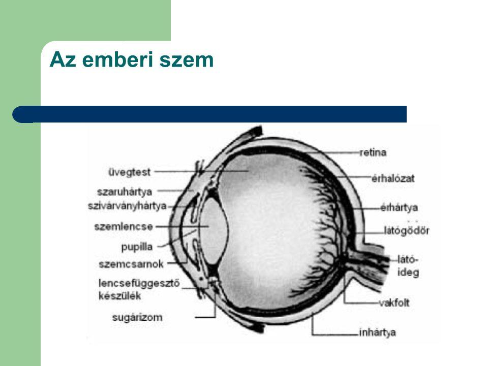 Az emberi szem