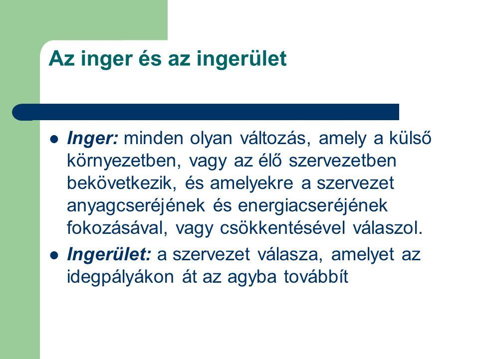 Az inger és az ingerület Inger: minden olyan változás, amely a külső környezetben, vagy az élő szervezetben bekövetkezik, és amelyekre a szervezet any