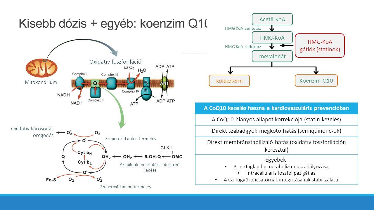 Kisebb dózis + egyéb: koenzim Q10 Oxidatív foszforiláció Mitokondrium Oxidatív károsodás öregedés Szuperoxid anion termelés Az ubiquinon szintézis utolsó két lépése A CoQ10 kezelés haszna a kardiovaszuláris prevencióban A CoQ10 hiányos állapot korrekciója (statin kezelés) Direkt szabadgyök megkötő hatás (semiquinone-ok) Direkt membránstabilizáló hatás (oxidatív foszforiláción keresztül) Egyebek: Prosztaglandin metabolizmus szabályozása Intracelluláris foszfolipáz gátlás A Ca-függő ioncsatornák integritásának stabilizálása Acetil-KoA HMG-KoA mevalonát koleszterin Koenzim Q10 HMG-KoA gátlók (statinok) HMG KoA szintetáz HMG KoA reduktáz