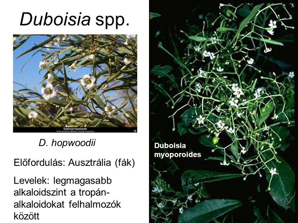 Duboisia spp. Előfordulás: Ausztrália (fák) Levelek: legmagasabb alkaloidszint a tropán- alkaloidokat felhalmozók között Duboisia myoporoides D. hopwo