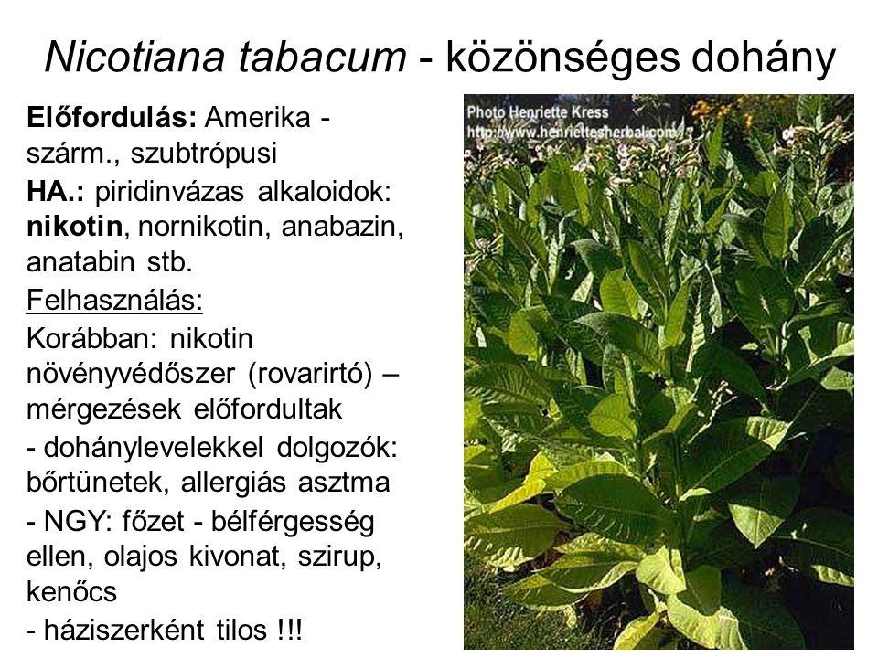 Nicotiana tabacum - közönséges dohány Előfordulás: Amerika - szárm., szubtrópusi HA.: piridinvázas alkaloidok: nikotin, nornikotin, anabazin, anatabin stb.