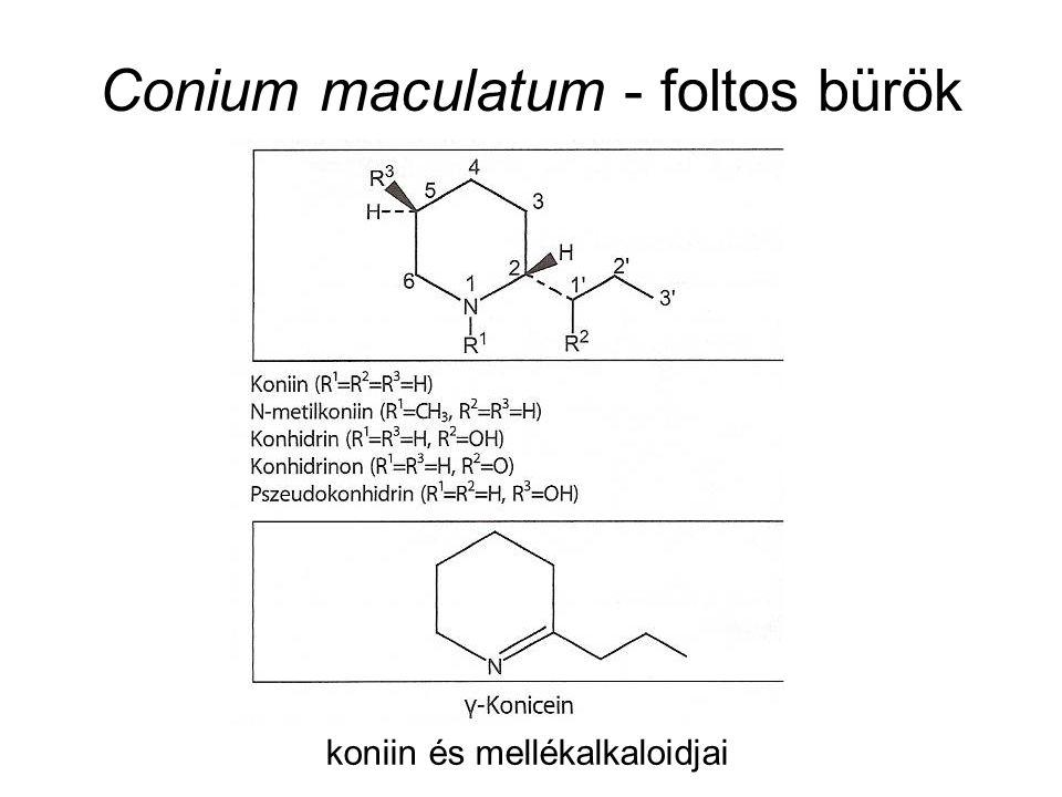 Conium maculatum - foltos bürök koniin és mellékalkaloidjai