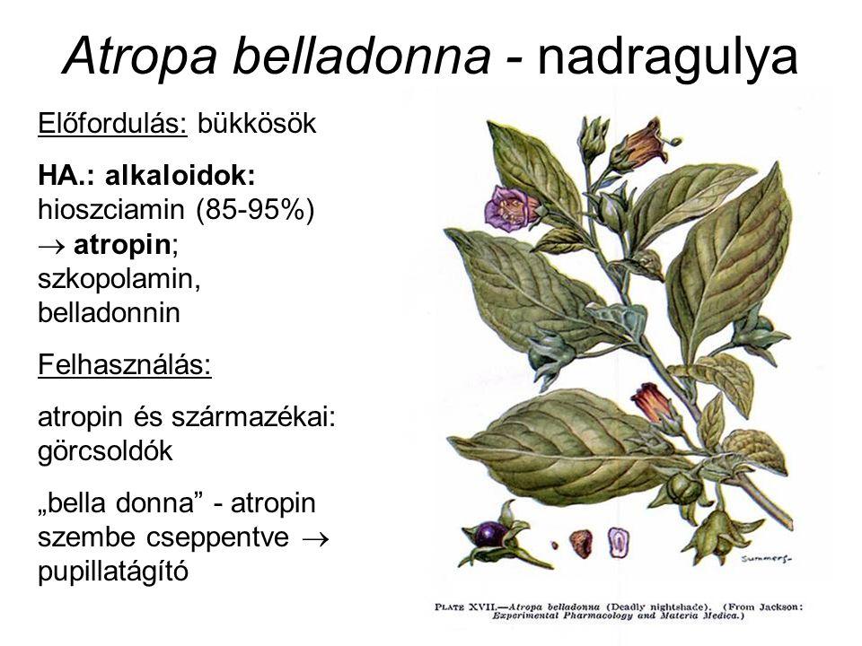 """Atropa belladonna - nadragulya Előfordulás: bükkösök HA.: alkaloidok: hioszciamin (85-95%)  atropin; szkopolamin, belladonnin Felhasználás: atropin és származékai: görcsoldók """"bella donna - atropin szembe cseppentve  pupillatágító"""