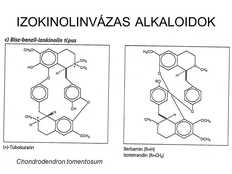 IZOKINOLINVÁZAS ALKALOIDOK Chondrodendron tomentosum