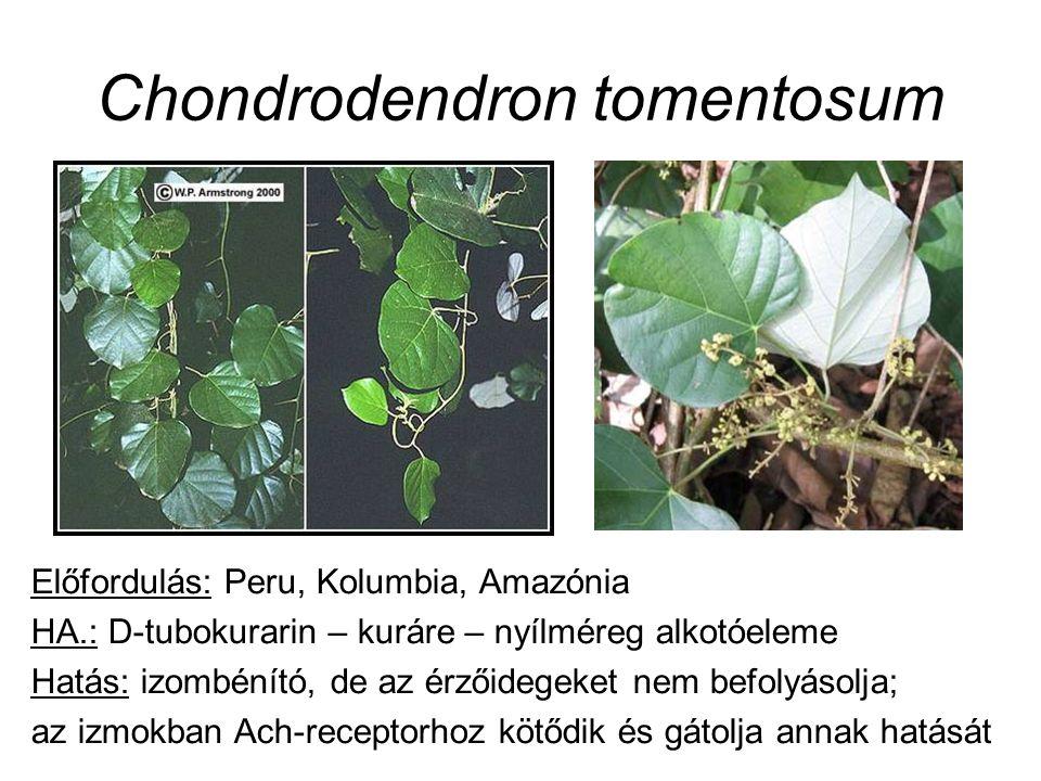 Előfordulás: Peru, Kolumbia, Amazónia HA.: D-tubokurarin – kuráre – nyílméreg alkotóeleme Hatás: izombénító, de az érzőidegeket nem befolyásolja; az izmokban Ach-receptorhoz kötődik és gátolja annak hatását