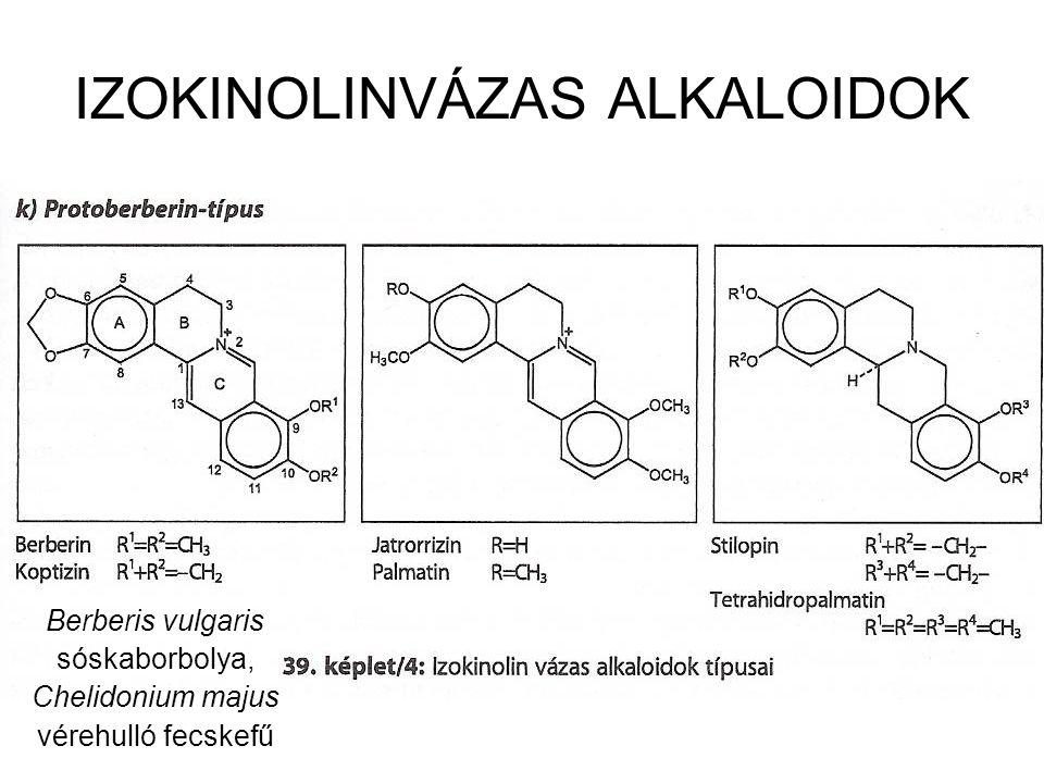 IZOKINOLINVÁZAS ALKALOIDOK Berberis vulgaris sóskaborbolya, Chelidonium majus vérehulló fecskefű