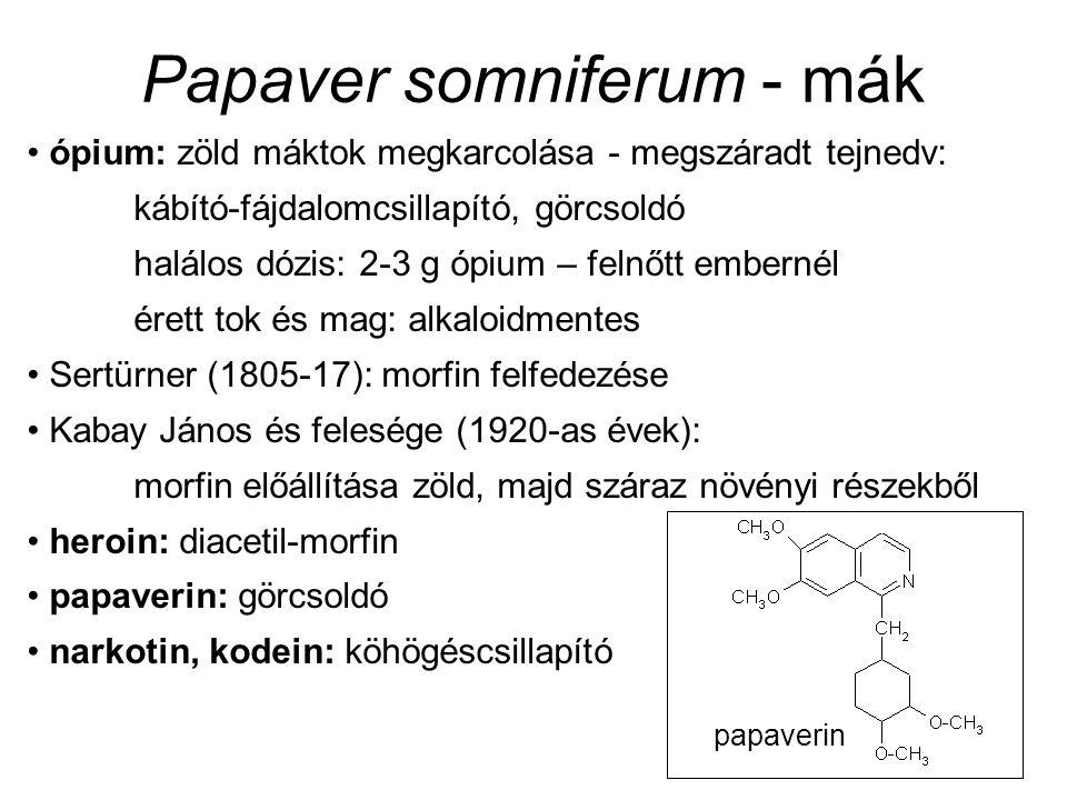 Papaver somniferum - mák ópium: zöld máktok megkarcolása - megszáradt tejnedv: kábító-fájdalomcsillapító, görcsoldó halálos dózis: 2-3 g ópium – felnő