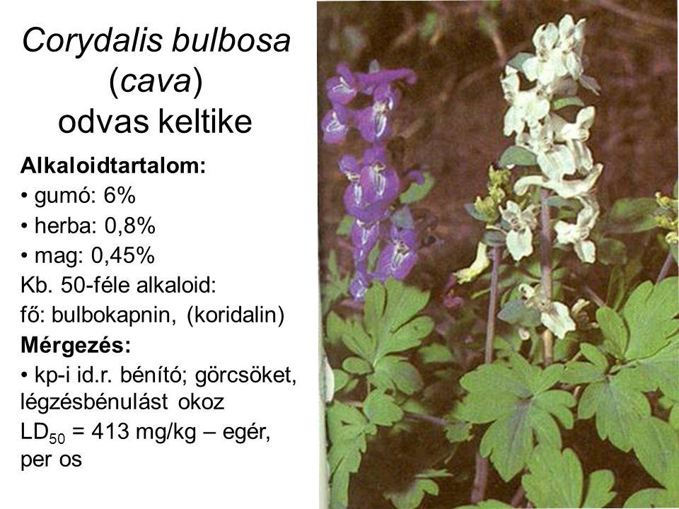 Corydalis bulbosa (cava) odvas keltike Alkaloidtartalom: gumó: 6% herba: 0,8% mag: 0,45% Kb. 50-féle alkaloid: fő: bulbokapnin, (koridalin) Mérgezés: