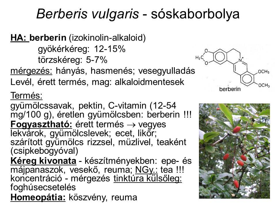 Berberis vulgaris - sóskaborbolya Termés: gyümölcssavak, pektin, C-vitamin (12-54 mg/100 g), éretlen gyümölcsben: berberin !!! Fogyasztható: érett ter