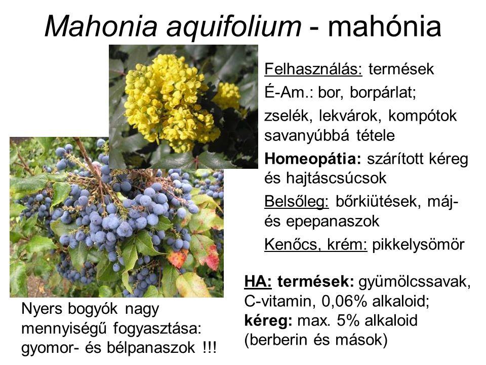 Mahonia aquifolium - mahónia Felhasználás: termések É-Am.: bor, borpárlat; zselék, lekvárok, kompótok savanyúbbá tétele Homeopátia: szárított kéreg és