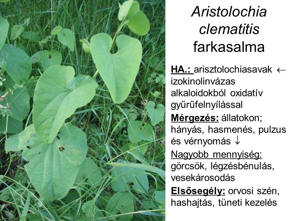 Aristolochia clematitis farkasalma HA.: arisztolochiasavak  izokinolinvázas alkaloidokból oxidatív gyűrűfelnyílással Mérgezés: állatokon; hányás, hasmenés, pulzus és vérnyomás  Nagyobb mennyiség: görcsök, légzésbénulás, vesekárosodás Elsősegély: orvosi szén, hashajtás, tüneti kezelés