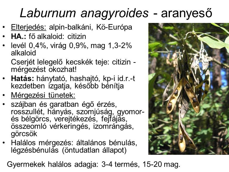 Elterjedés: alpin-balkáni, Kö-Európa HA.: fő alkaloid: citizin levél 0,4%, virág 0,9%, mag 1,3-2% alkaloid Cserjét lelegelő kecskék teje: citizin - mé