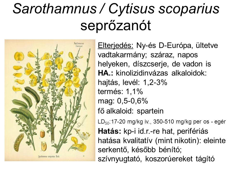 Sarothamnus / Cytisus scoparius seprőzanót Elterjedés: Ny-és D-Európa, ültetve vadtakarmány; száraz, napos helyeken, díszcserje, de vadon is HA.: kinolizidinvázas alkaloidok: hajtás, levél: 1,2-3% termés: 1,1% mag: 0,5-0,6% fő alkaloid: spartein LD 50 :17-20 mg/kg iv., 350-510 mg/kg per os - egér Hatás: kp-i id.r.-re hat, perifériás hatása kvalitatív (mint nikotin): eleinte serkentő, később bénító; szívnyugtató, koszorúereket tágító