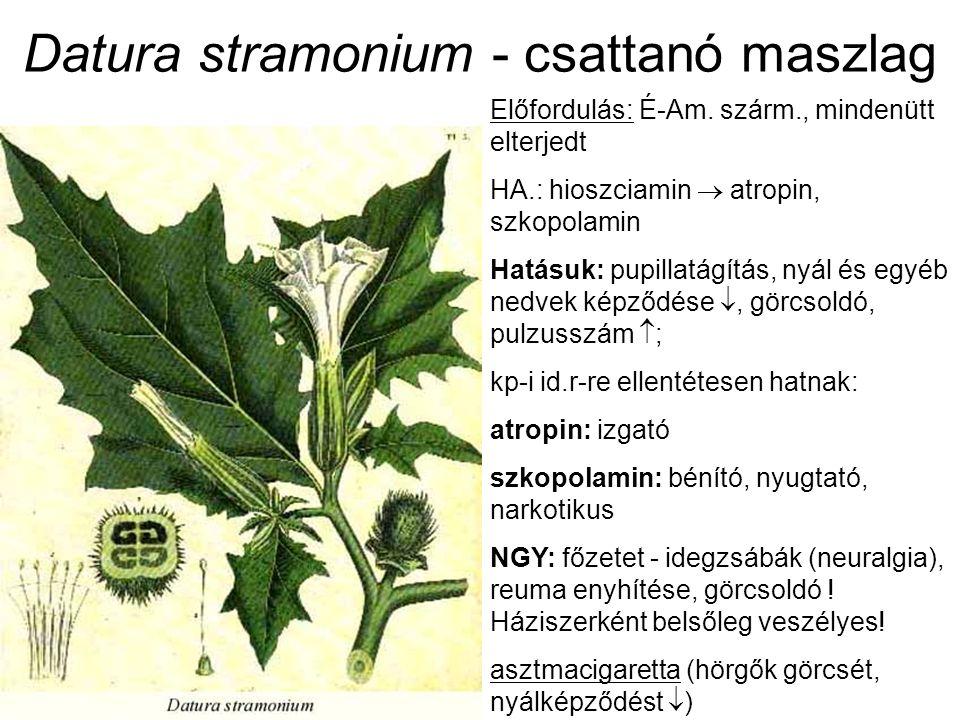 Datura stramonium - csattanó maszlag Előfordulás: É-Am. szárm., mindenütt elterjedt HA.: hioszciamin  atropin, szkopolamin Hatásuk: pupillatágítás, n