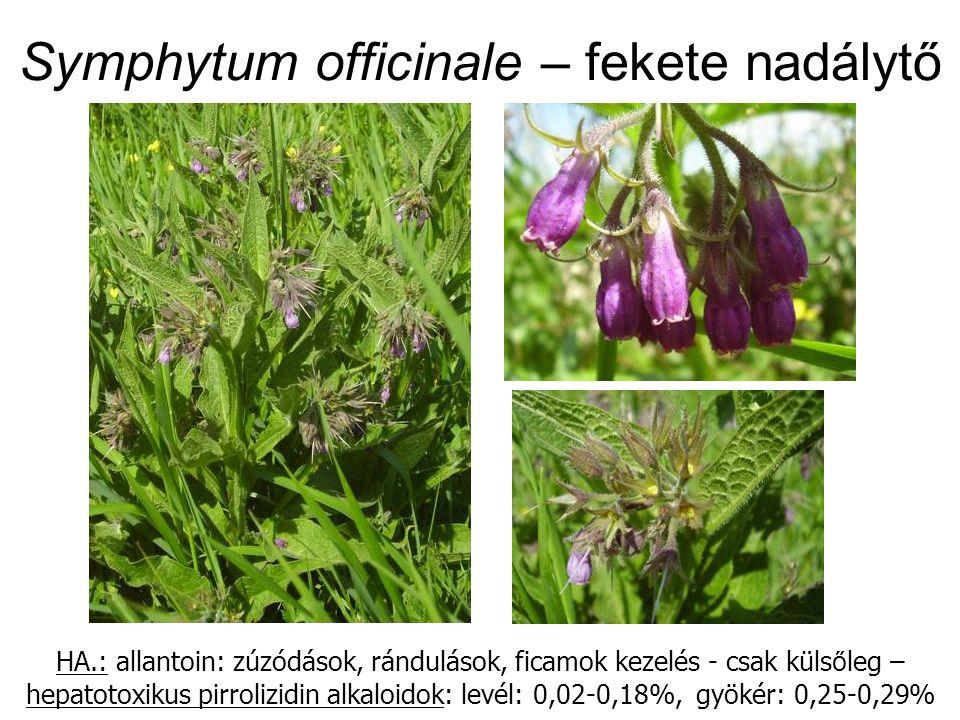 Symphytum officinale – fekete nadálytő HA.: allantoin: zúzódások, rándulások, ficamok kezelés - csak küls ő leg – hepatotoxikus pirrolizidin alkaloidok: levél: 0,02-0,18%, gyökér: 0,25-0,29%