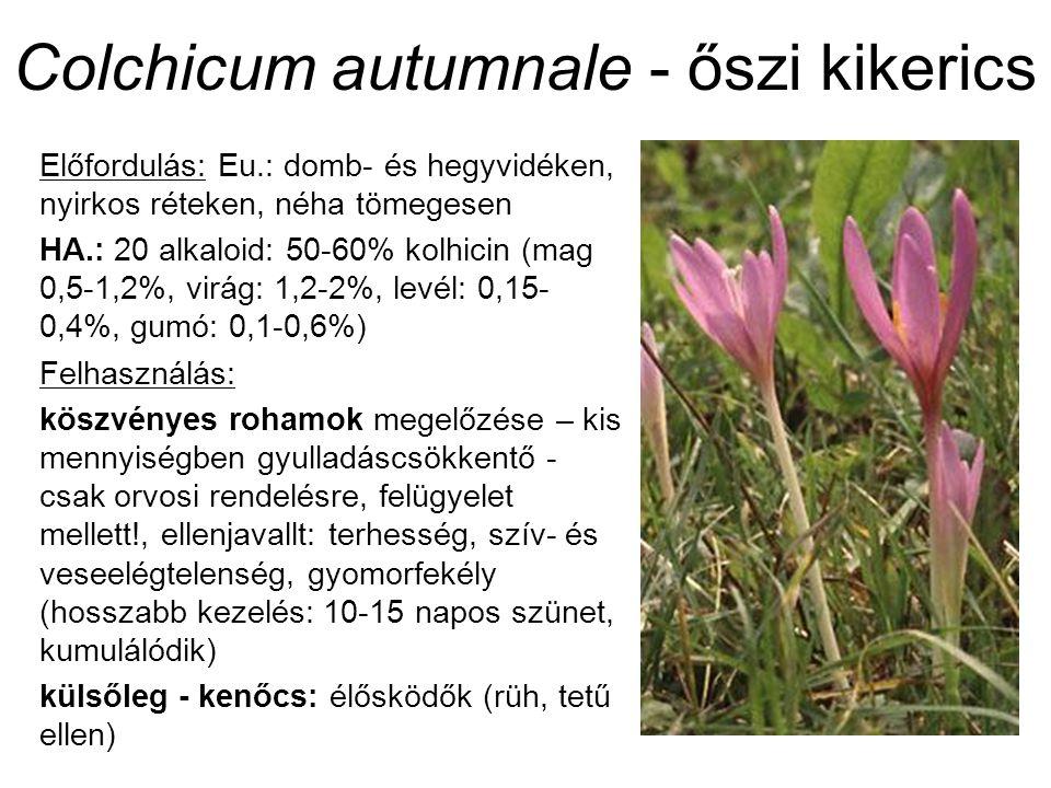 Colchicum autumnale - őszi kikerics Előfordulás: Eu.: domb- és hegyvidéken, nyirkos réteken, néha tömegesen HA.: 20 alkaloid: 50-60% kolhicin (mag 0,5-1,2%, virág: 1,2-2%, levél: 0,15- 0,4%, gumó: 0,1-0,6%) Felhasználás: köszvényes rohamok megelőzése – kis mennyiségben gyulladáscsökkentő - csak orvosi rendelésre, felügyelet mellett!, ellenjavallt: terhesség, szív- és veseelégtelenség, gyomorfekély (hosszabb kezelés: 10-15 napos szünet, kumulálódik) külsőleg - kenőcs: élősködők (rüh, tetű ellen)